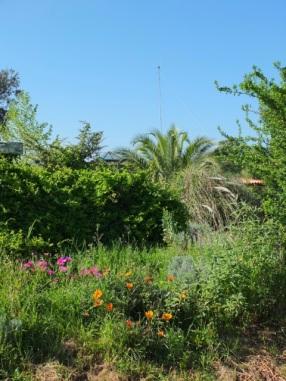 Solarvillagebüro, versteckt in der Botanik